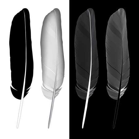blackwhite: Feather blackwhite. Illustration