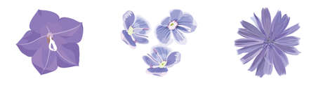 lilac: Lilac flowers. Vecror isolated objects
