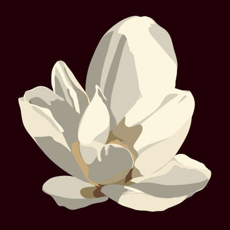 flower close up: Magnolia flower. Vector isolated image Illustration