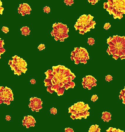 an inflorescence: marigold background. Illustration