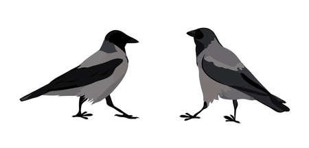 crows: hooded crows.