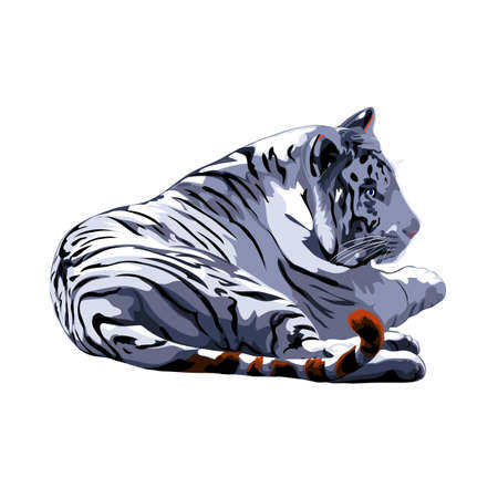 tigre blanc: tigre blanc. Illustration