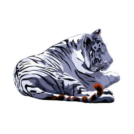 bengalensis: white tiger. Illustration