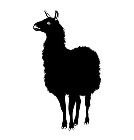 llama: Lama, Llama silhouette. black and white