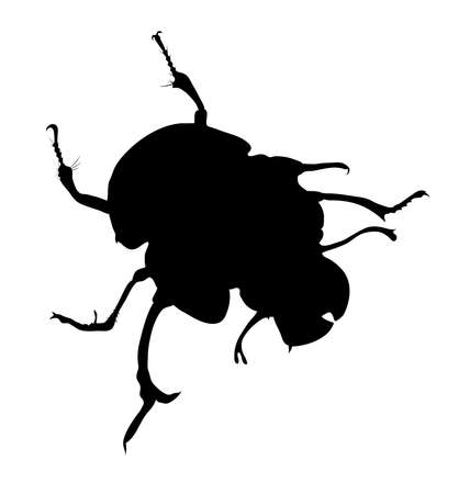 geotrupidae: dor-beetle. black and white image. silhouette
