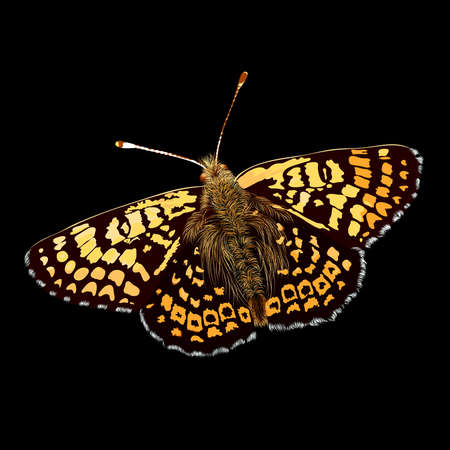 butterfly background: broun vector butterfly on black background,