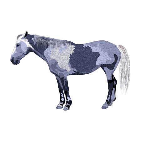 gray horse: gray horse. Equus. vector illustration