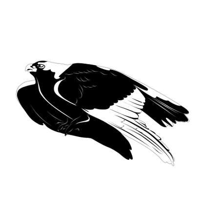 aguila real: Águila dorada. en blanco y negro. ilustración vectorial Vectores