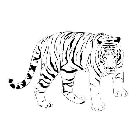 tigre vector. imagen en blanco y negro