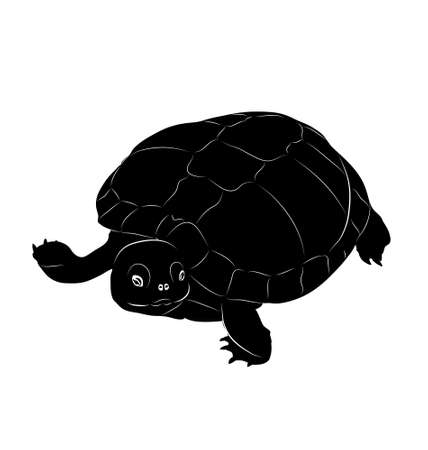 animal silhouette: vector turtle. black and white animal. silhouette. outline Illustration