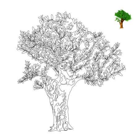 Olivo. Ilustración Vectorial. Dibujo Ilustraciones Vectoriales, Clip ...