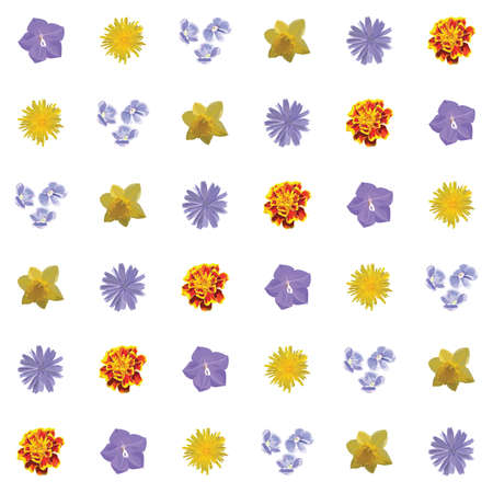 flower petal: Floral Seamless Texture. Vector Pattern. Color Flowers: knapweed, cornflower, bluebell, harebell, campanula, forget-me-not, marigold, narcissus, jonquil, dandelion, blowball Illustration
