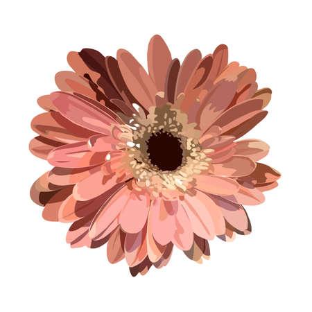 gerbera flower. vector image Illustration