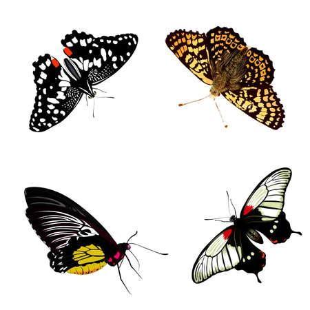 vecor: butterflies vecor set. realistic insect
