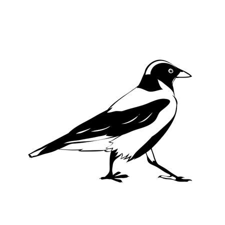 Hooded crows. vector isolated images. Illustration