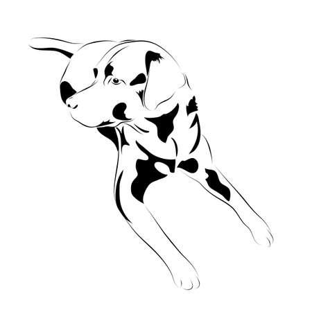 labrador. black and white vector dog