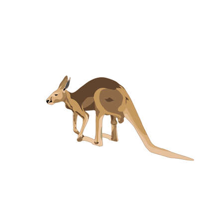 color kangaroo on white background. vector animal