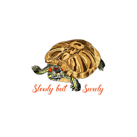 vector turtle. pond slider. Trachemys scripta. slowly but surely phrase. photorealistic animal with text. motivator. vector illustration
