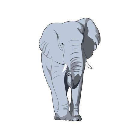 gray elephant. front view. illustration of realistic mammal. simple design element for t-shirt, banner, poster, invitation, flyer, placard. vector animal print Stock Illustratie