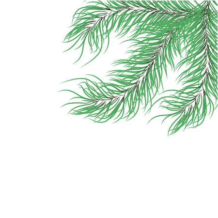 green fir branches on a white background.Vector Stock Vector - 16264437