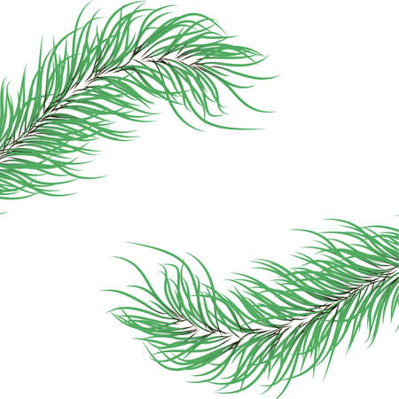 green fir branches on a white background.Vector