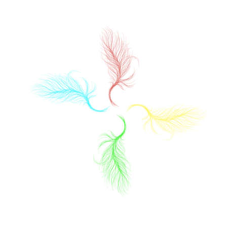 Drawn lines of feathers on white background Vector illustration