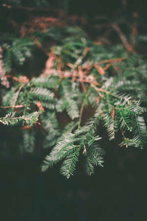 Plant in the wooded forest