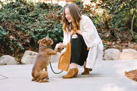 A pet Boston Terrier performs a handshake dog trick with young white female owner Stock Photo