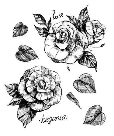 Bloemen vector schets. Stock Illustratie
