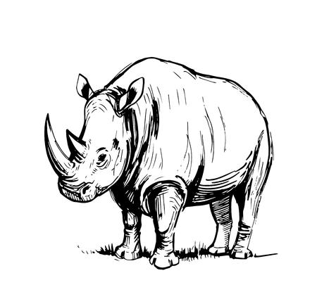 Sketch of rhinoceros. Illusztráció