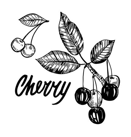 Cherry sketch