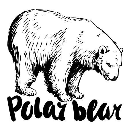 Sketch of polar bear. Hand drawn vector illustration