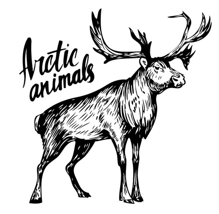 Sketch of reindeer. Hand drawn illustration converted to vector