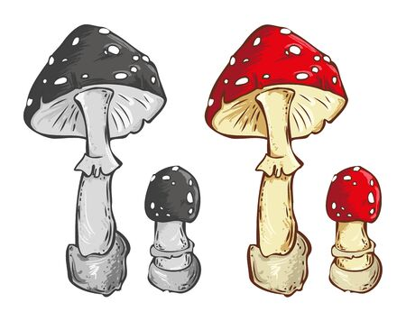 inedible: Amanita mushroom vector illustration. Color and black-and-white image on a white background Illustration
