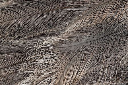 Texture background brown feathers close up Stok Fotoğraf