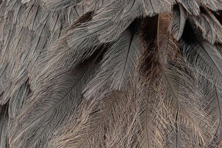 Texture background bird feathers
