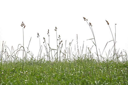 Background long grasses growing wild in a meadow isolated Stok Fotoğraf