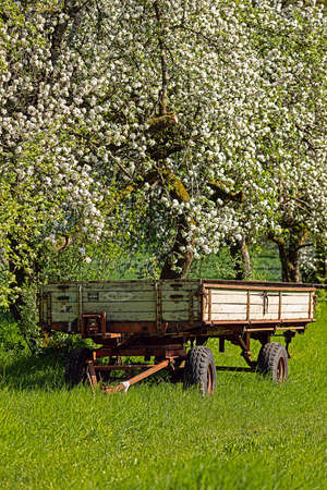 Empty trailer of a tractor parked under flowering trees in spring Stok Fotoğraf