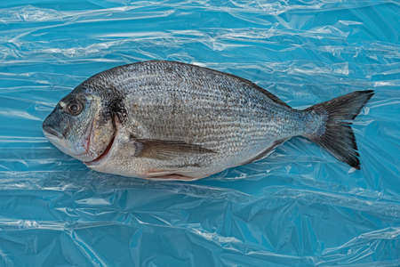 Ready to cook is head sea bream dorada on foil water Stok Fotoğraf