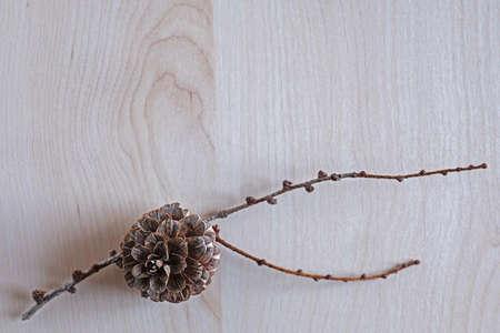 Branch with cone background Standard-Bild - 130132165