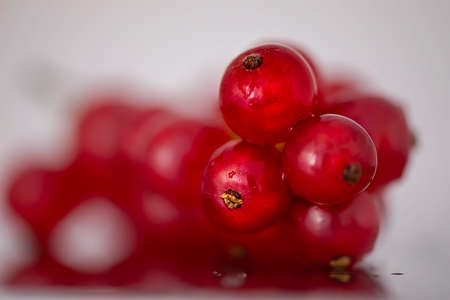 Bunch of red currants. Shallow depth of field