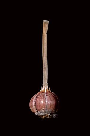 One garlic bulb isolated on black background Imagens