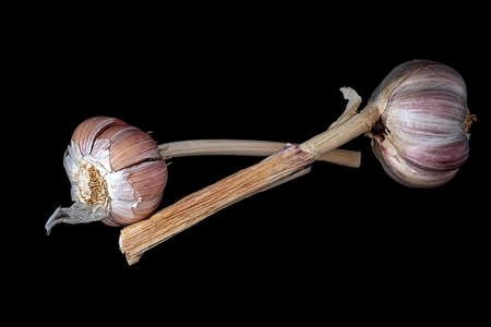 Two garlic bulbs isolated on black background