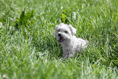 Cute little girl sitting in the grass Banco de Imagens