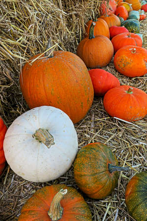 Colorful autumn pumpkin harvest
