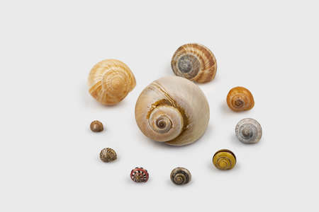 Many different snail shells in a circle on white background