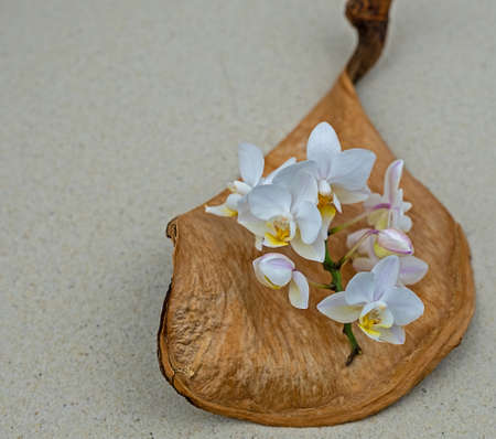 Beautiful orchid flowers in a large seed pod lying on sand Stockfoto