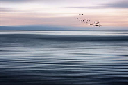 Long-term photography at the Ammersee in Bavaria, with flock of birds