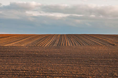 View to the sky over harvested field