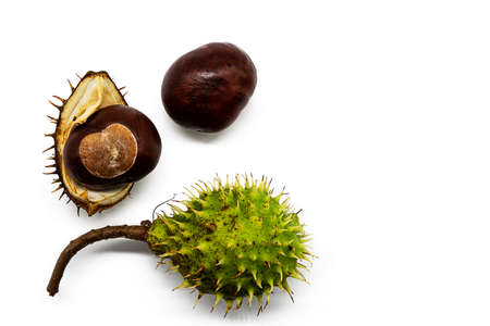 three phases of a chestnut isolated on white background Stock Photo